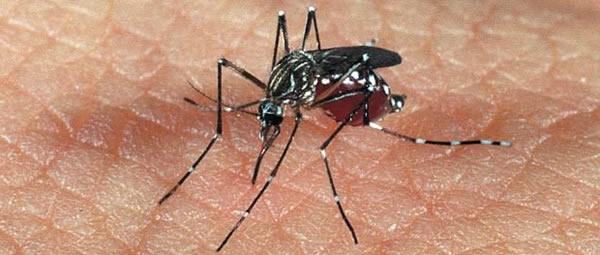 Dengue: Mantendo o inimigo longe