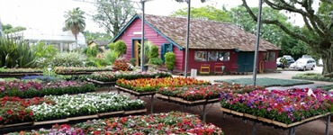 Café e floricultura em um só lugar